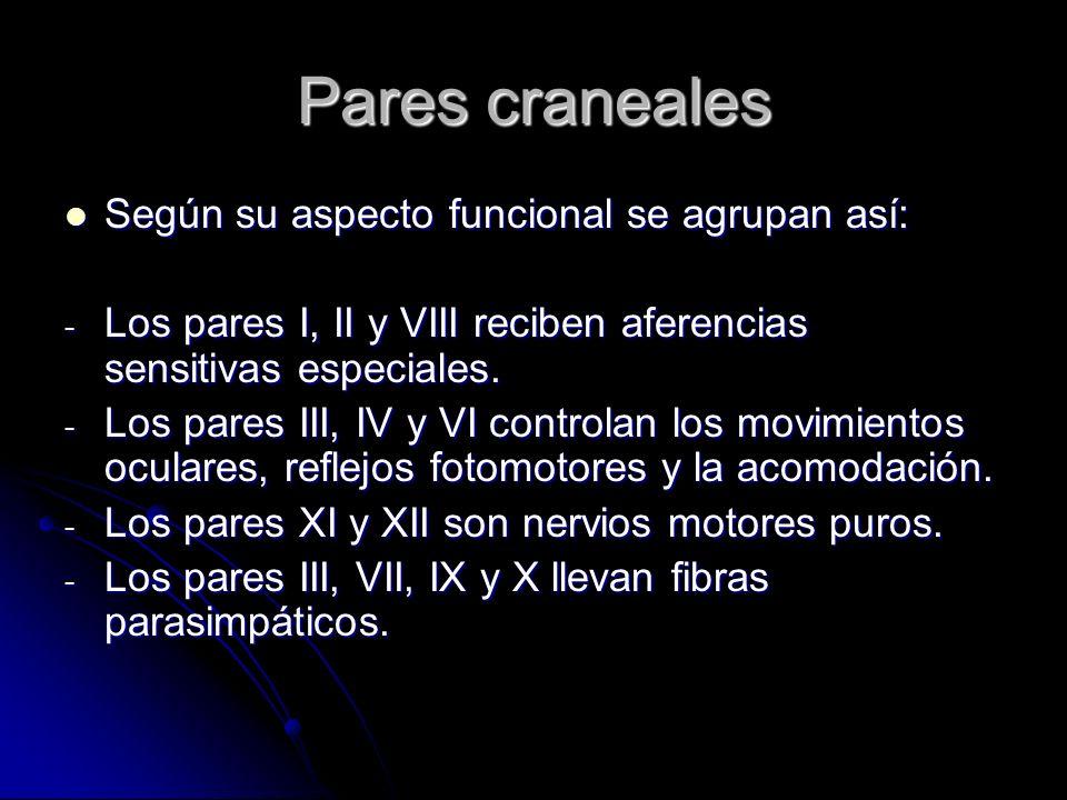 Pares craneales Según su aspecto funcional se agrupan así: Según su aspecto funcional se agrupan así: - Los pares I, II y VIII reciben aferencias sens