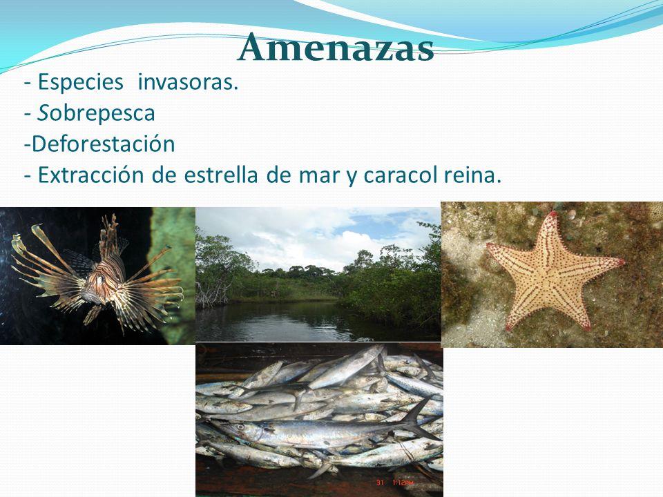 - Especies invasoras. - Sobrepesca -Deforestación - Extracción de estrella de mar y caracol reina. Amenazas