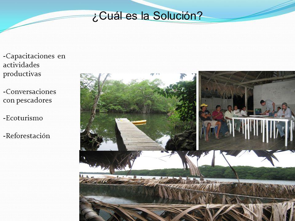 ¿Cuál es la Solución? -Capacitaciones en actividades productivas -Conversaciones con pescadores -Ecoturismo -Reforestación