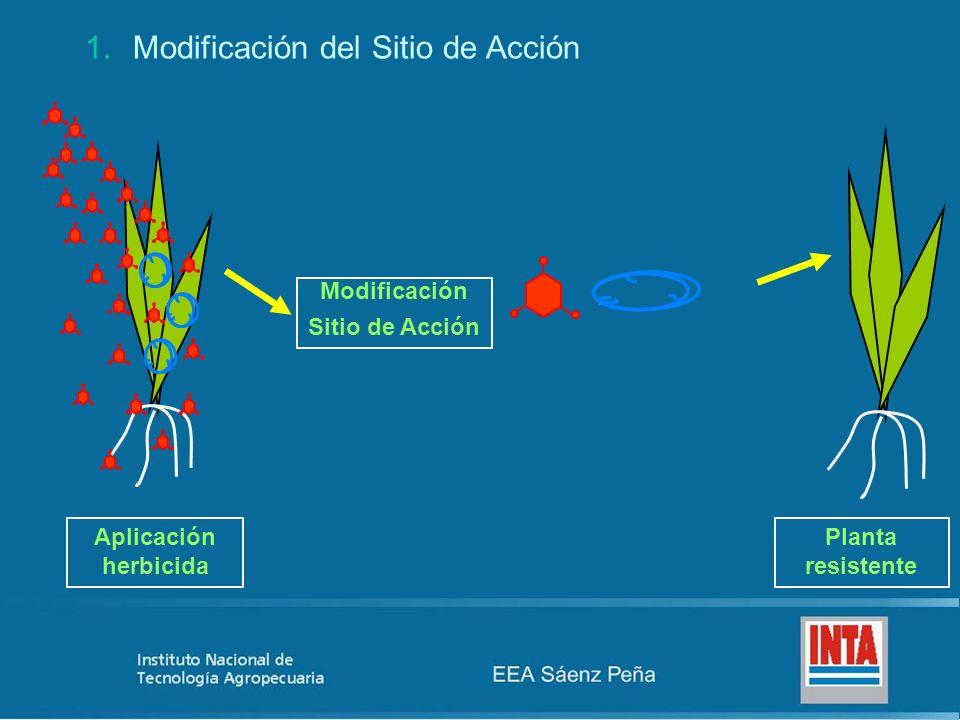 1.Modificación del Sitio de Acción Aplicación herbicida Planta resistente Modificación Sitio de Acción