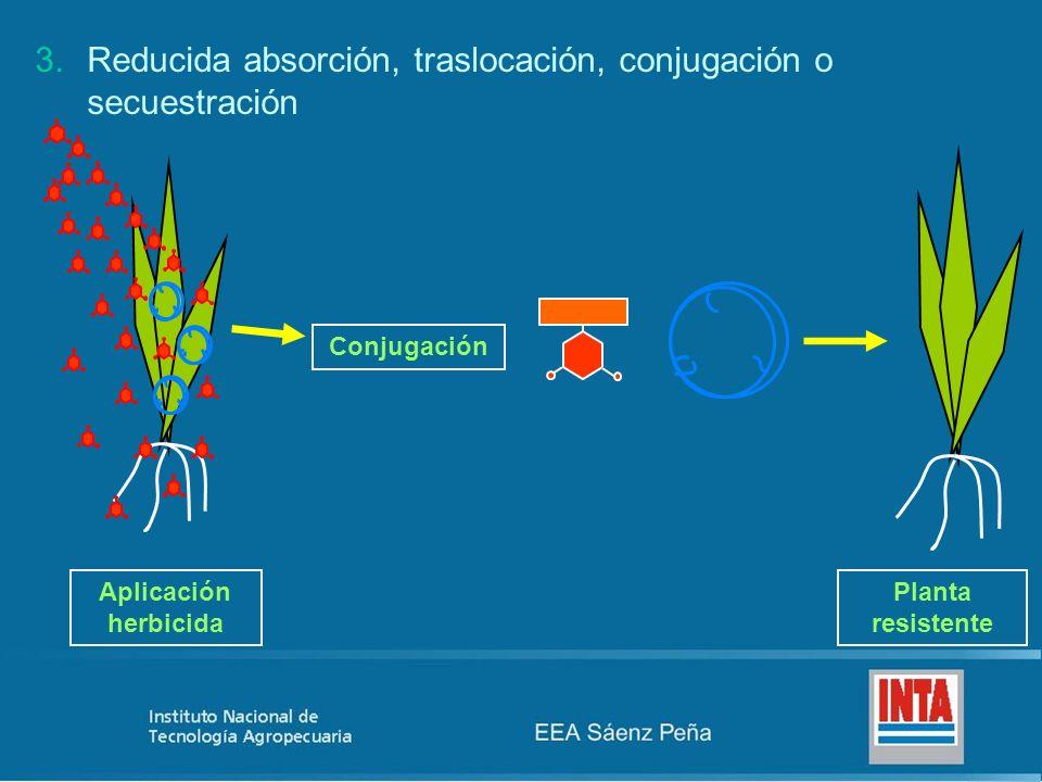 Aplicación herbicida Planta resistente Conjugación 3.Reducida absorción, traslocación, conjugación o secuestración