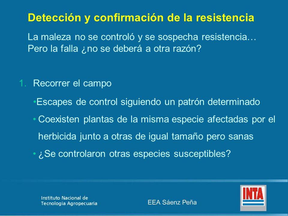 Detección y confirmación de la resistencia La maleza no se controló y se sospecha resistencia… Pero la falla ¿no se deberá a otra razón? 1.Recorrer el