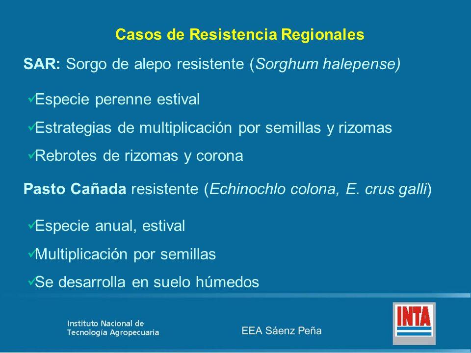 Casos de Resistencia Regionales SAR: Sorgo de alepo resistente (Sorghum halepense) Especie perenne estival Estrategias de multiplicación por semillas