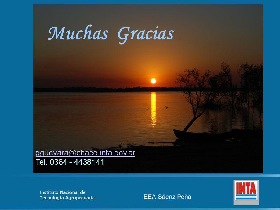 Muchas Gracias gguevara@chaco.inta.gov.ar Tel. 0364 - 4438141