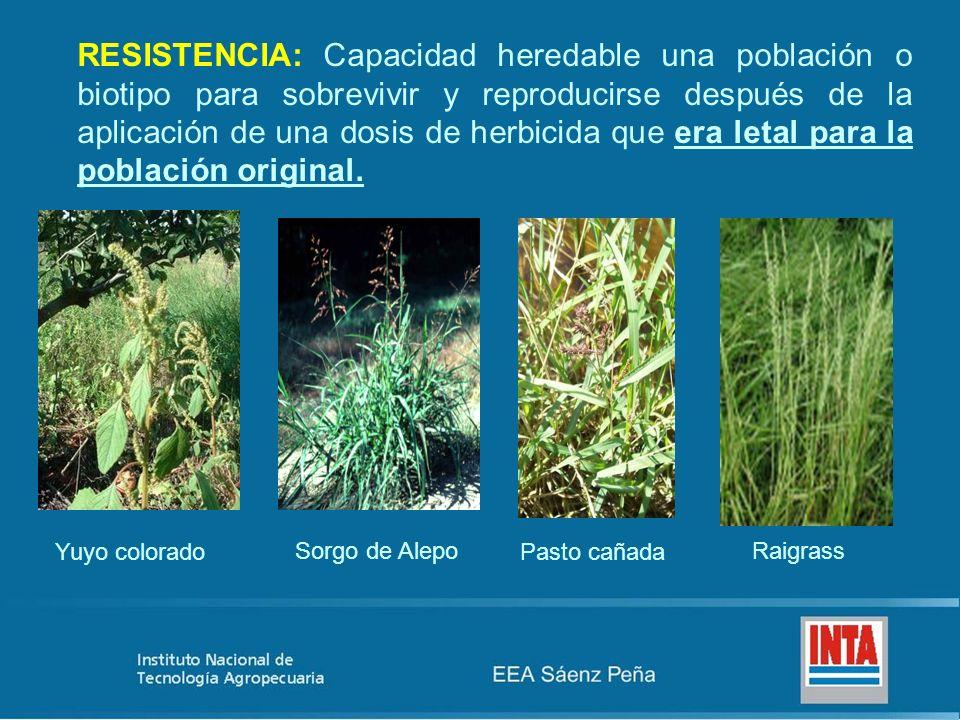 RESISTENCIA: Capacidad heredable una población o biotipo para sobrevivir y reproducirse después de la aplicación de una dosis de herbicida que era let