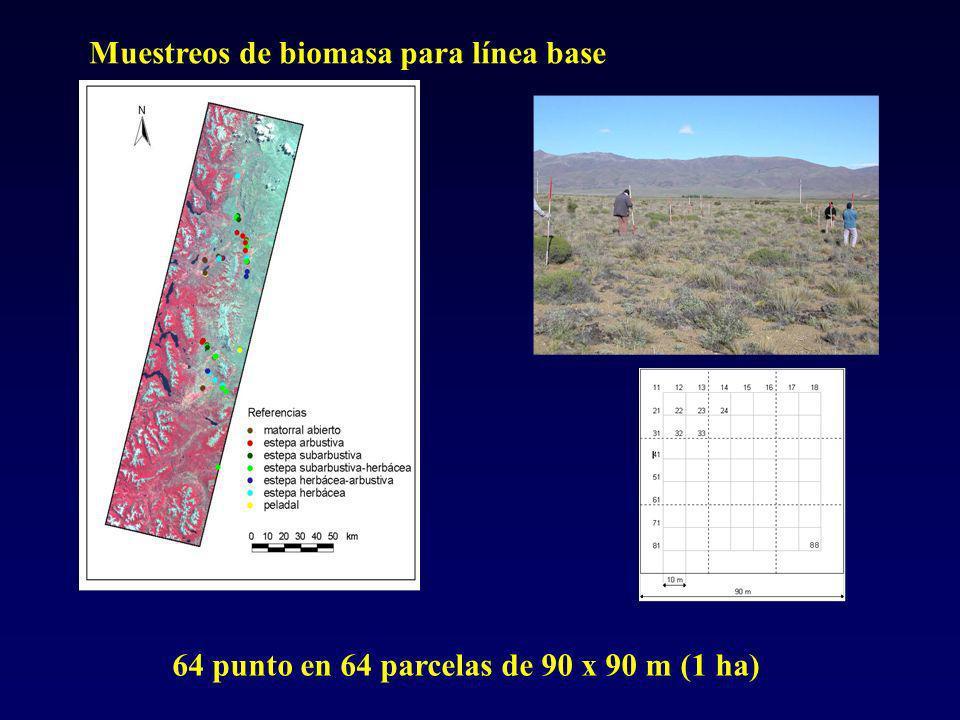 Muestreos de biomasa para línea base 64 punto en 64 parcelas de 90 x 90 m (1 ha)