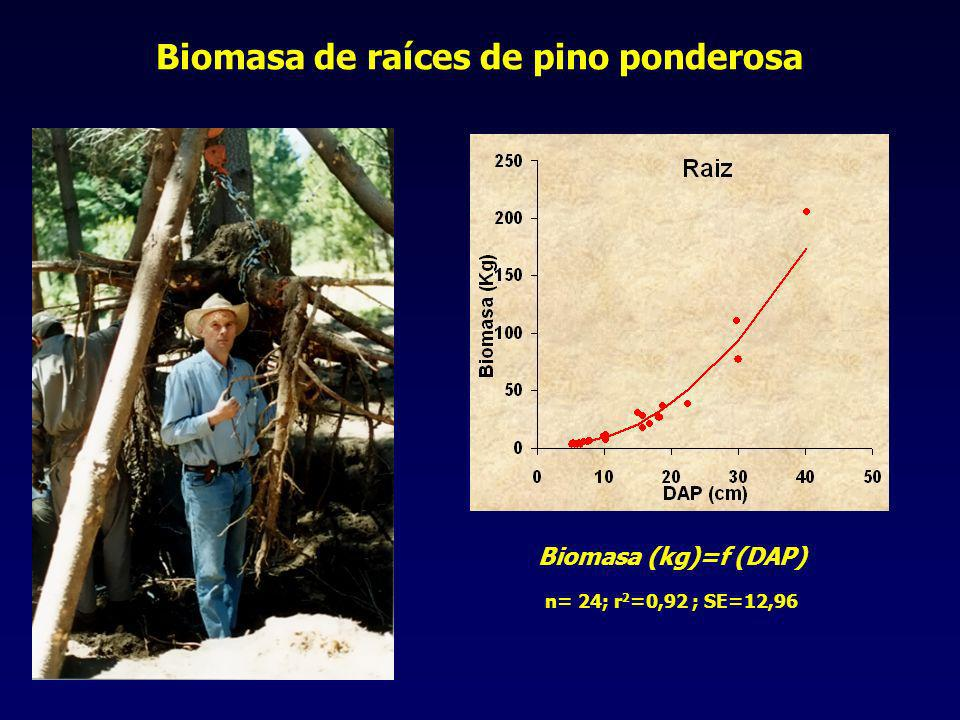 Biomasa de raíces de pino ponderosa Biomasa (kg)=f (DAP) n= 24; r 2 =0,92 ; SE=12,96