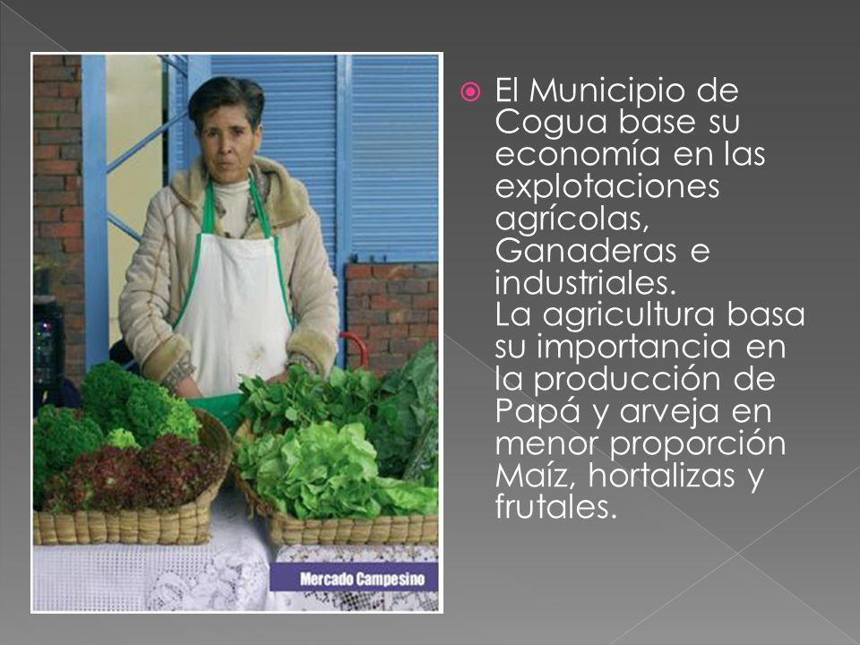 El Municipio de Cogua base su economía en las explotaciones agrícolas, Ganaderas e industriales.