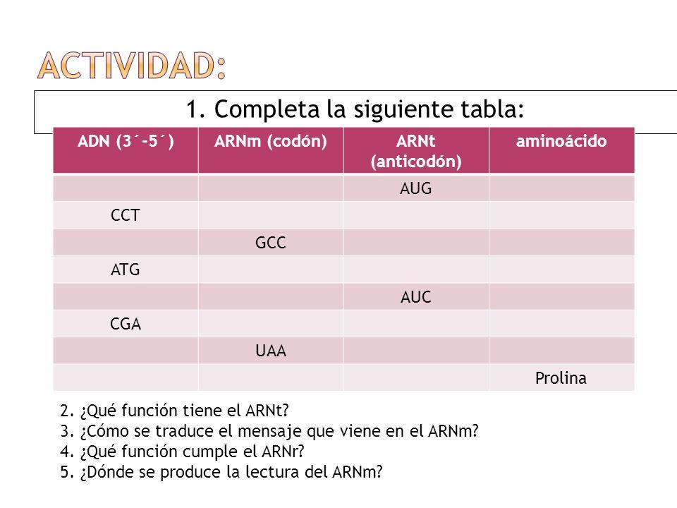 1. Completa la siguiente tabla: ADN (3´-5´)ARNm (codón)ARNt (anticodón) aminoácido AUG CCT GCC ATG AUC CGA UAA Prolina 2. ¿Qué función tiene el ARNt?