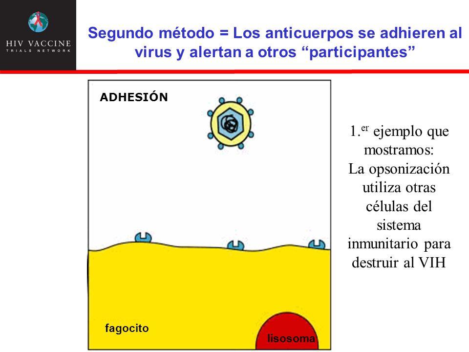 Segundo método = Los anticuerpos se adhieren al virus y alertan a otros participantes 1. er ejemplo que mostramos: La opsonización utiliza otras célul