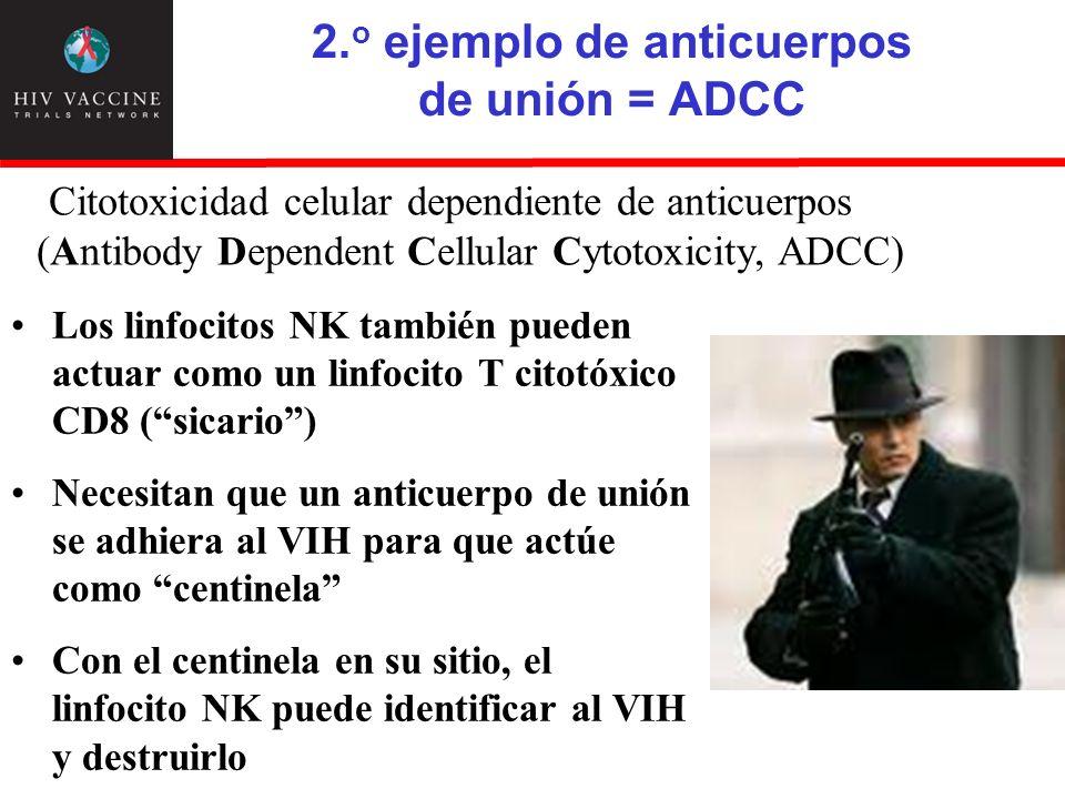 2. o ejemplo de anticuerpos de unión = ADCC Los linfocitos NK también pueden actuar como un linfocito T citotóxico CD8 (sicario) Necesitan que un anti