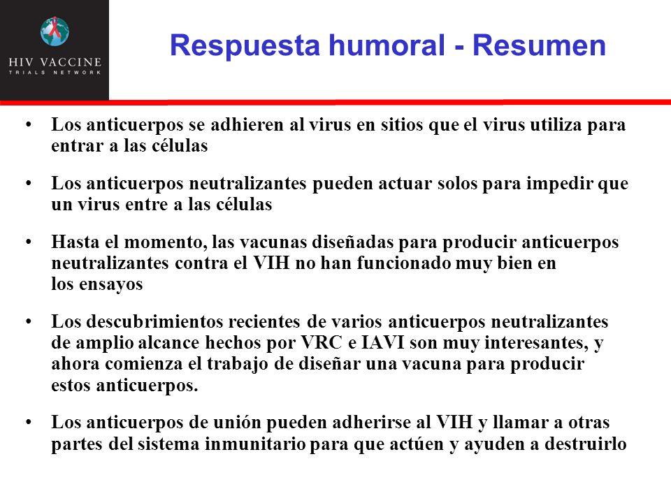 Respuesta humoral - Resumen Los anticuerpos se adhieren al virus en sitios que el virus utiliza para entrar a las células Los anticuerpos neutralizant