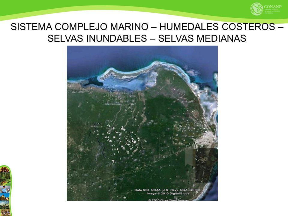 SISTEMA COMPLEJO MARINO – HUMEDALES COSTEROS – SELVAS INUNDABLES – SELVAS MEDIANAS