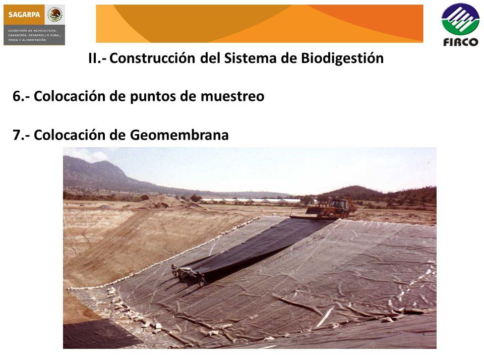 II.- Construcción del Sistema de Biodigestión 6.- Colocación de puntos de muestreo 7.- Colocación de Geomembrana
