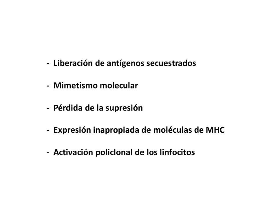 - Liberación de antígenos secuestrados - Mimetismo molecular - Pérdida de la supresión - Expresión inapropiada de moléculas de MHC - Activación policl