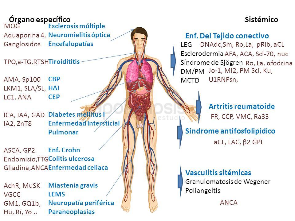Órgano específicoSistémico Esclerosis múltiple Neuromielitis óptica Encefalopatías Tiroidititis CBP HAI CEP Diabetes mellitus I Enfermedad Intersticia