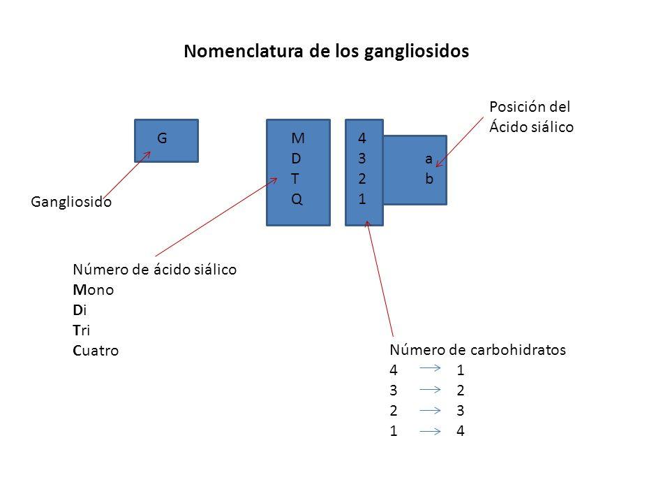Nomenclatura de los gangliosidos GM4D3aT2bQ1GM4D3aT2bQ1 Gangliosido Número de ácido siálico Mono Di Tri Cuatro Posición del Ácido siálico Número de ca