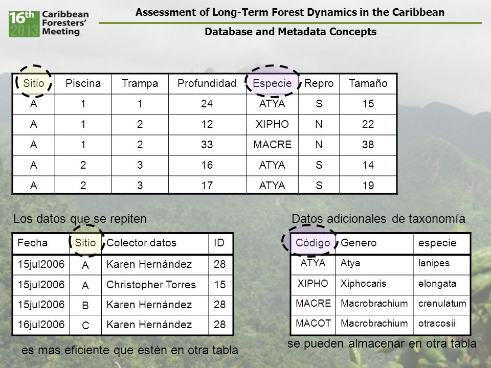 Assessment of Long-Term Forest Dynamics in the Caribbean Database and Metadata Concepts SitioPiscinaTrampaProfundidadEspecieReproTamaño A1124ATYAS15 A