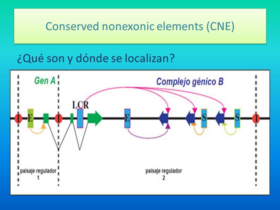 Conserved nonexonic elements (CNE) ¿Qué son y dónde se localizan?