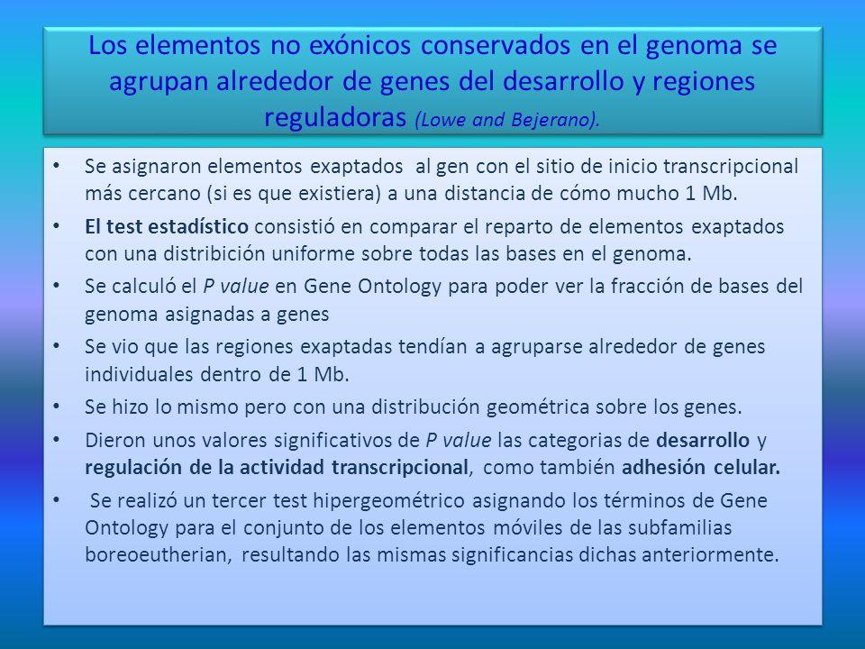 Los elementos no exónicos conservados en el genoma se agrupan alrededor de genes del desarrollo y regiones reguladoras (Lowe and Bejerano). Se asignar
