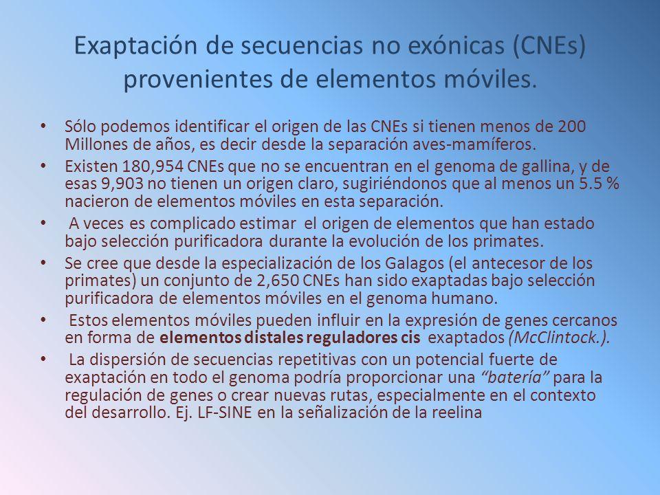 Exaptación de secuencias no exónicas (CNEs) provenientes de elementos móviles. Sólo podemos identificar el origen de las CNEs si tienen menos de 200 M