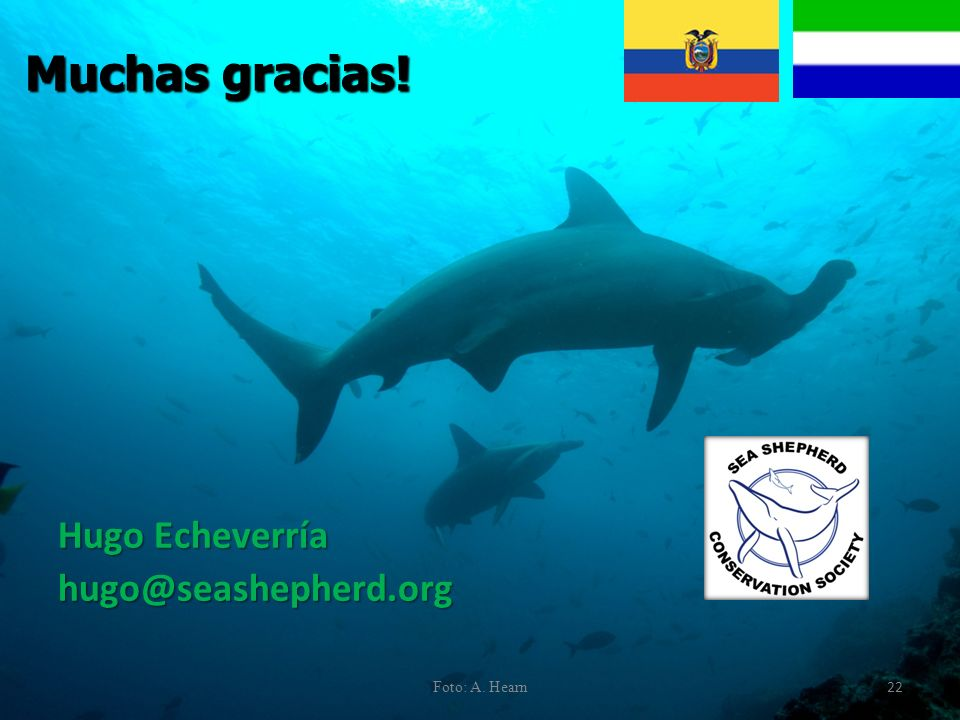 Hugo Echeverría hugo@seashepherd.org Muchas gracias! Foto: A. Hearn 22