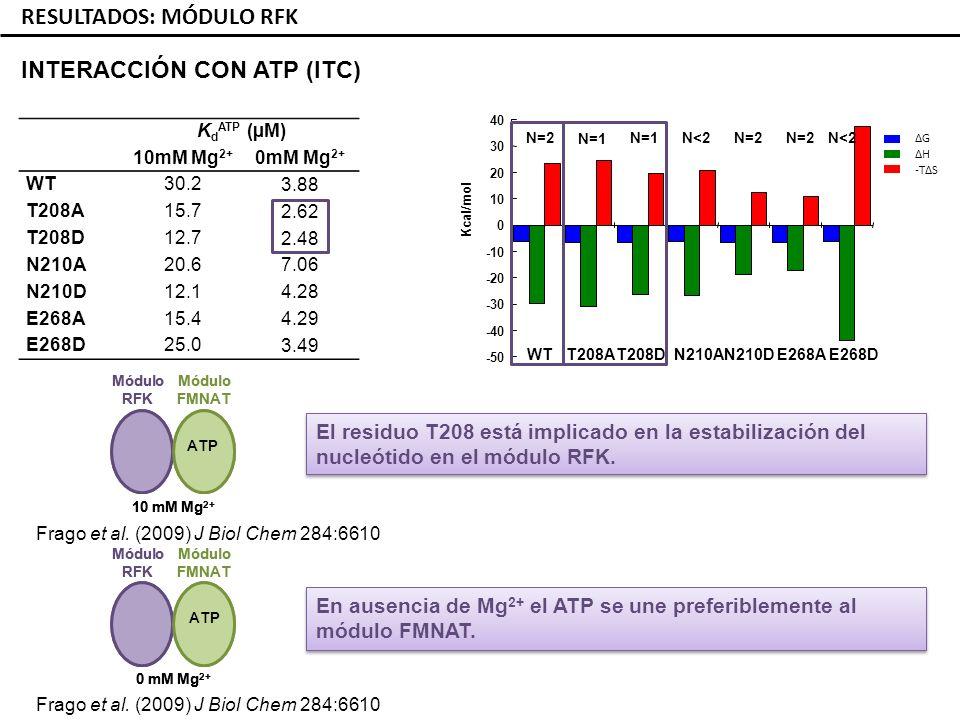 -50 -40 -30 -20 -10 0 10 20 30 40 Kcal/mol WTN210DT208DT208AE268DE268AN210A N=2 N=1 N<2N=2 N<2 RESULTADOS: MÓDULO RFK INTERACCIÓN CON ATP (ITC) K d ATP (µM) 10mM Mg 2+ WT30.2 T208A15.7 T208D12.7 N210A20.6 N210D12.1 E268A15.4 E268D25.0 ΔG ΔH -TΔS En ausencia de Mg 2+ el ATP se une preferiblemente al módulo FMNAT.