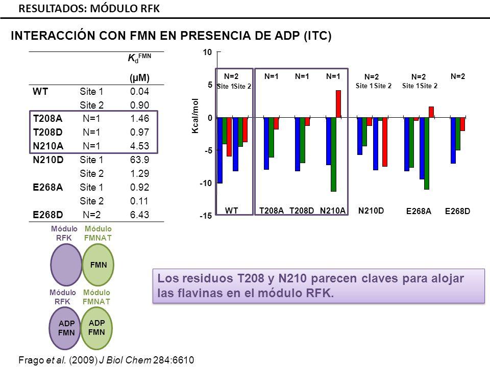K d FMN (µM) WTSite 10.04 Site 20.90 T208AN=11.46 T208DN=10.97 N210AN=14.53 N210DSite 163.9 Site 21.29 E268ASite 10.92 Site 20.11 E268DN=26.43 RESULTADOS: MÓDULO RFK INTERACCIÓN CON FMN EN PRESENCIA DE ADP (ITC) Los residuos T208 y N210 parecen claves para alojar las flavinas en el módulo RFK.