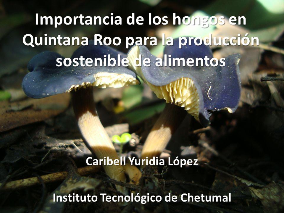 Importancia de los hongos en Quintana Roo para la producción sostenible de alimentos Caribell Yuridia López Instituto Tecnológico de Chetumal