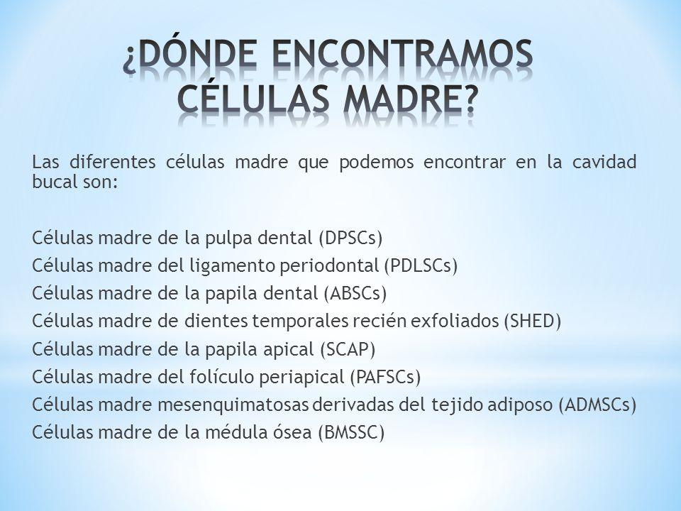 Las diferentes células madre que podemos encontrar en la cavidad bucal son: Células madre de la pulpa dental (DPSCs) Células madre del ligamento perio
