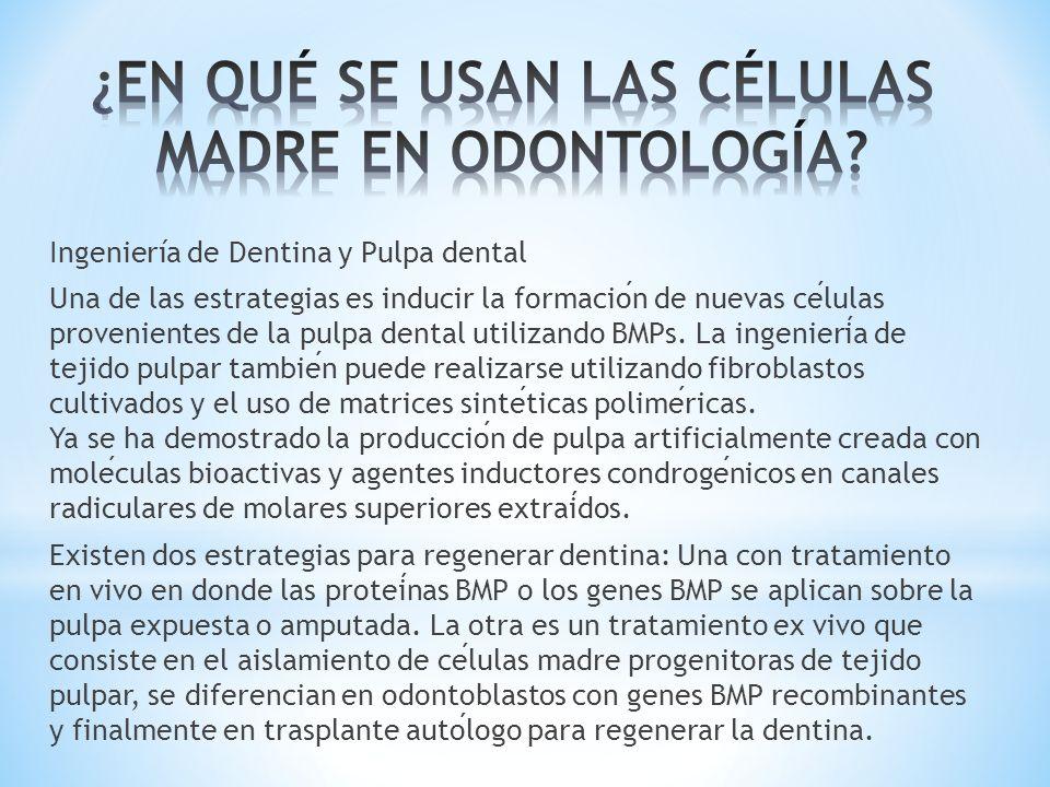 Ingeniería de Dentina y Pulpa dental Una de las estrategias es inducir la formacion de nuevas celulas provenientes de la pulpa dental utilizando BMPs.