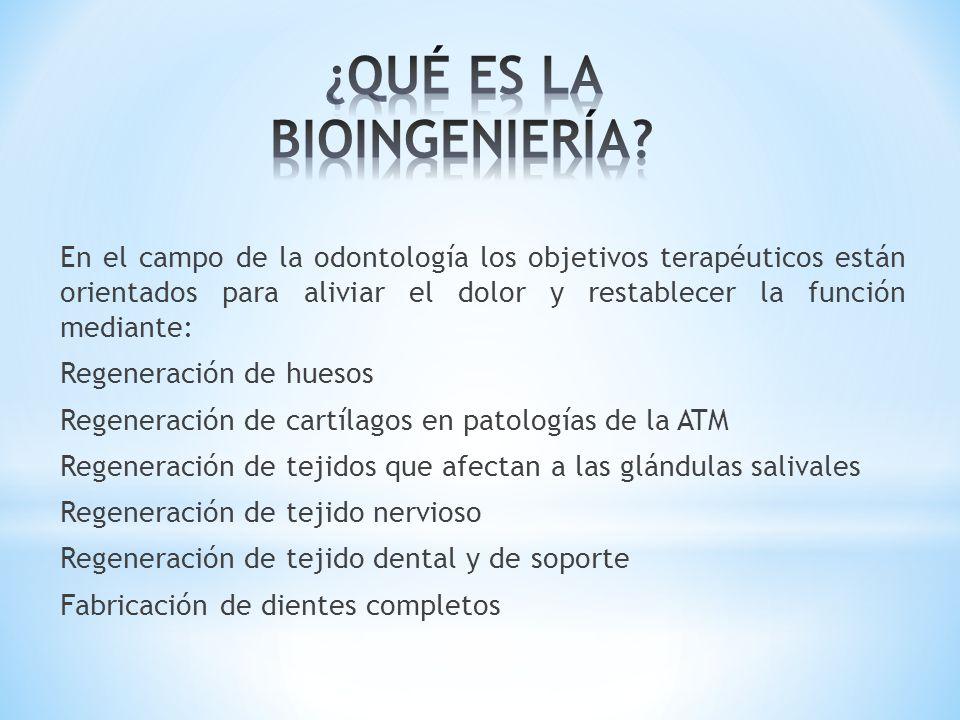 En el campo de la odontología los objetivos terapéuticos están orientados para aliviar el dolor y restablecer la función mediante: Regeneración de hue