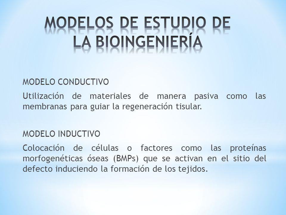 MODELO CONDUCTIVO Utilización de materiales de manera pasiva como las membranas para guiar la regeneración tisular. MODELO INDUCTIVO Colocación de cél