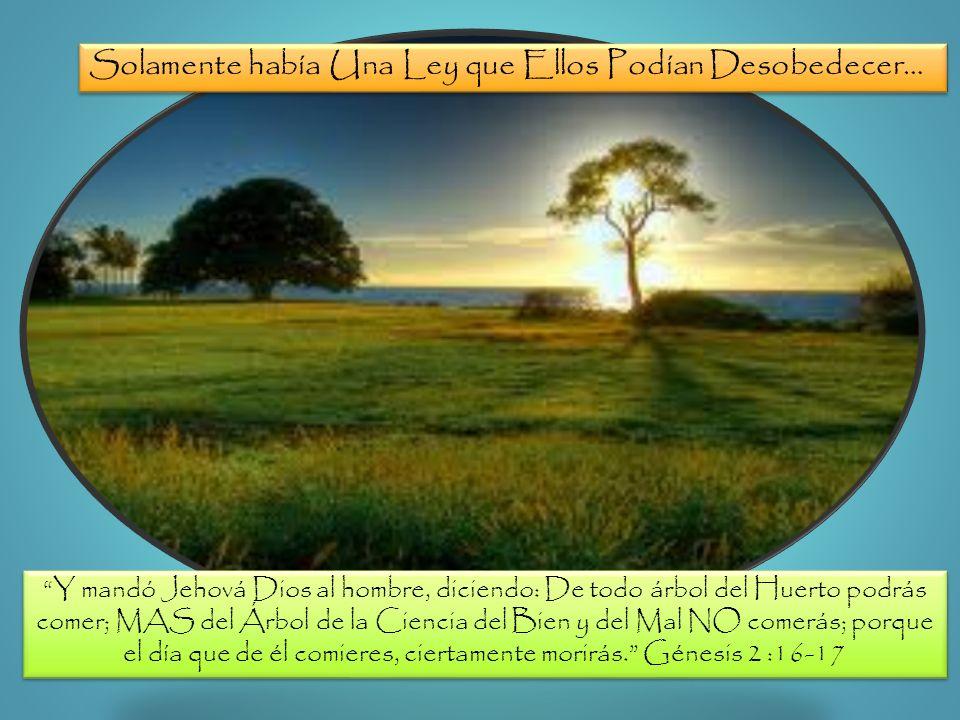 The Tree of Life The Tree of the Knowledge of Good and Evil Solamente había Una Ley que Ellos Podían Desobedecer… Y mandó Jehová Dios al hombre, dicie