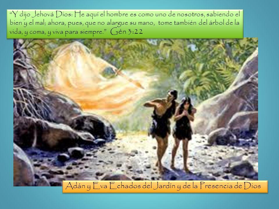 Y dijo Jehová Dios: He aquí el hombre es como uno de nosotros, sabiendo el bien y el mal; ahora, pues, que no alargue su mano, tome también del árbol