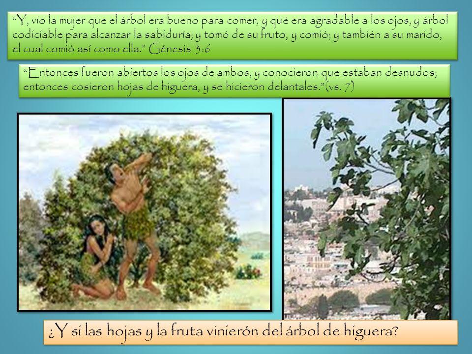 Y, vio la mujer que el árbol era bueno para comer, y qué era agradable a los ojos, y árbol codiciable para alcanzar la sabiduría; y tomó de su fruto,