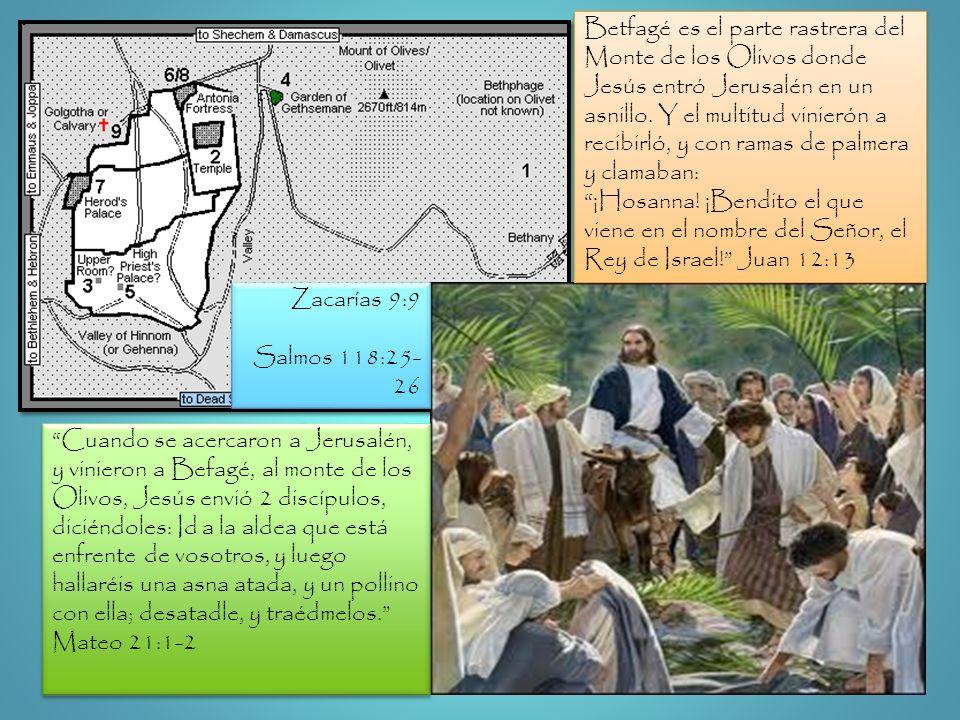 Betfagé es el parte rastrera del Monte de los Olivos donde Jesús entró Jerusalén en un asnillo. Y el multitud vinierón a recibirló, y con ramas de pal