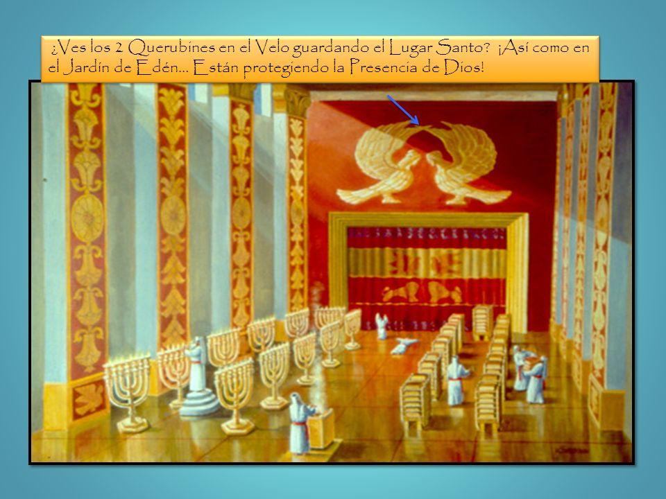 ¿Ves los 2 Querubines en el Velo guardando el Lugar Santo? ¡Así como en el Jardín de Edén… Están protegiendo la Presencia de Dios!