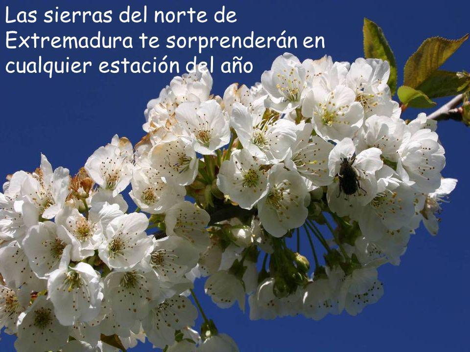 Valle del Ambroz (Cáceres) Y recuerda … NO SE LO DIGAS A NADIE
