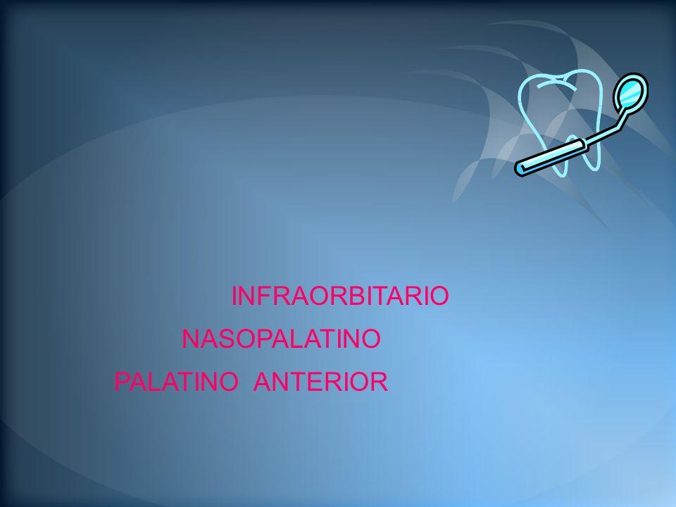 El agujero infraorbitario se localiza y palpa debajo del reborde inferior de la órbita a unos 2 cm del ala de la nariz.