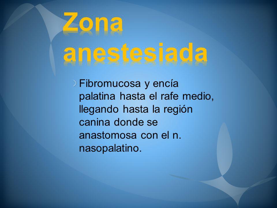 Fibromucosa y encía palatina hasta el rafe medio, llegando hasta la región canina donde se anastomosa con el n. nasopalatino.