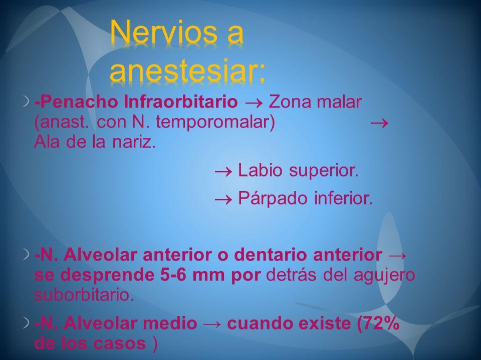 -Penacho Infraorbitario Zona malar (anast. con N. temporomalar) Ala de la nariz. Labio superior. Párpado inferior. -N. Alveolar anterior o dentario an