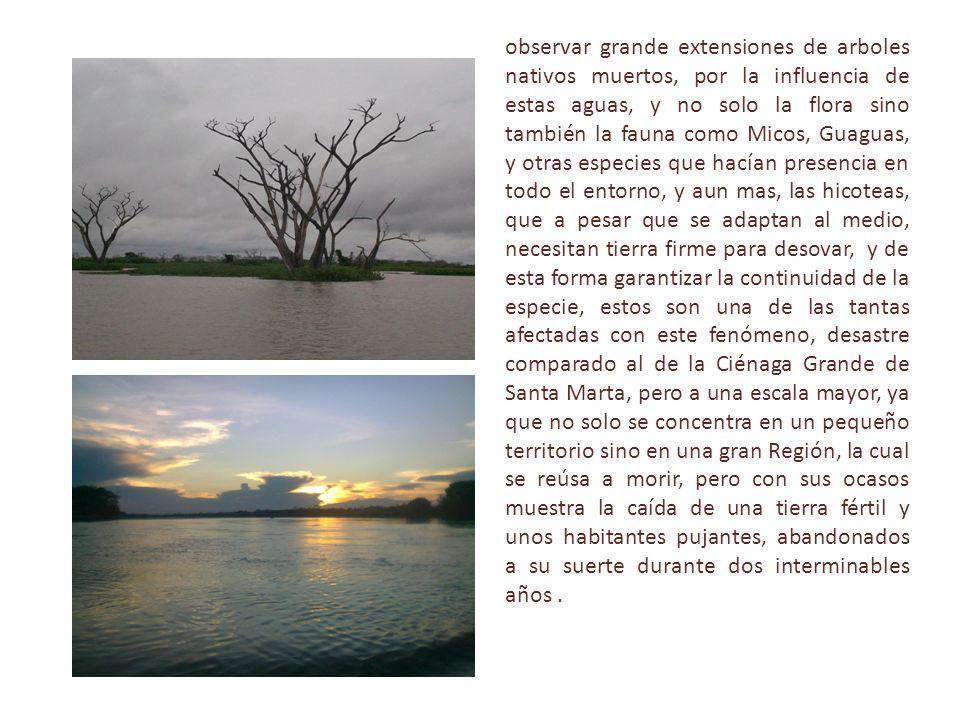 observar grande extensiones de arboles nativos muertos, por la influencia de estas aguas, y no solo la flora sino también la fauna como Micos, Guaguas