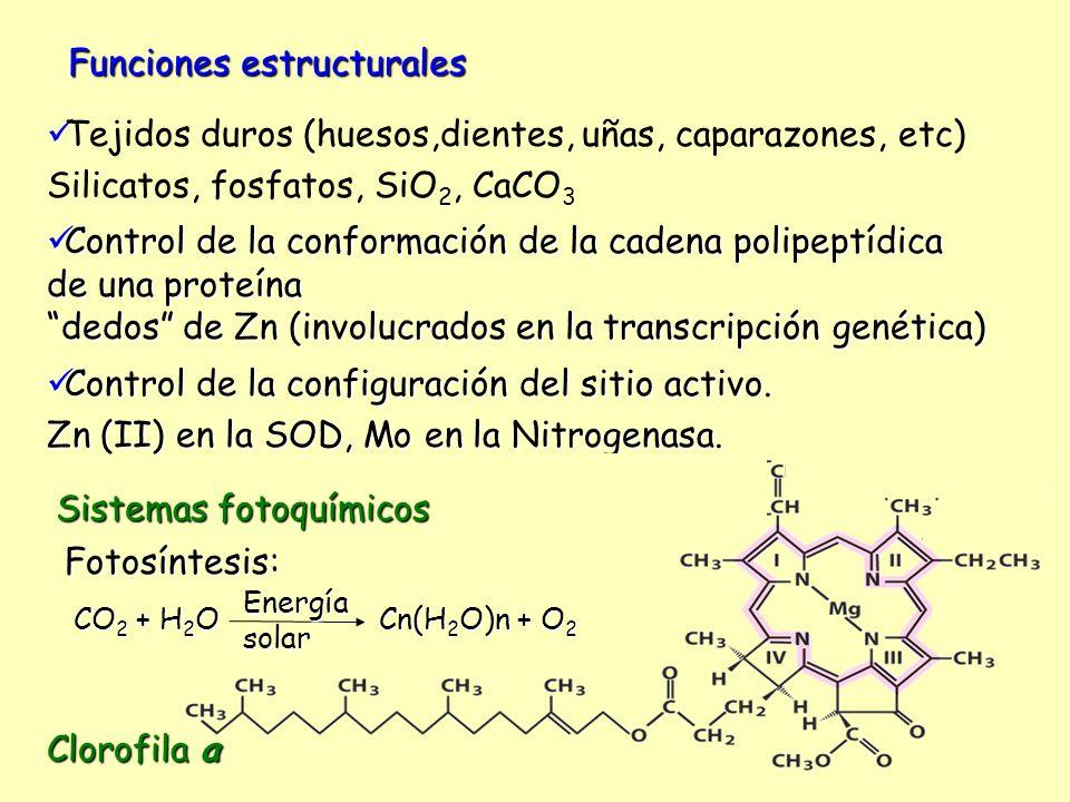 Funciones estructurales Tejidos duros (huesos,dientes, uñas, caparazones, etc) Silicatos, fosfatos, SiO 2, CaCO 3 Control de la conformación de la cad
