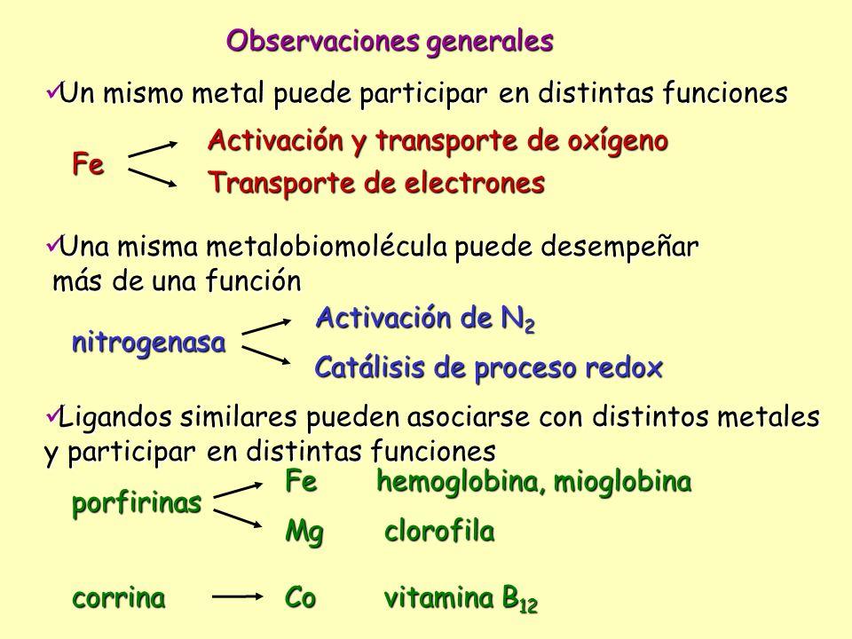 Observaciones generales Ligandos similares pueden asociarse con distintos metales Ligandos similares pueden asociarse con distintos metales y particip
