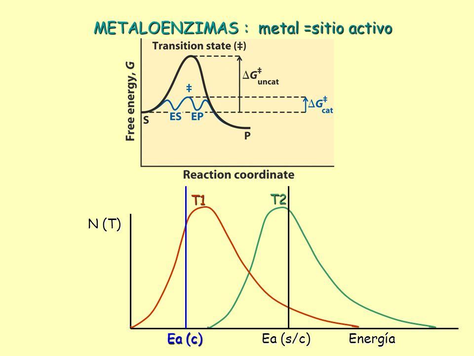 METALOENZIMAS : metal =sitio activo T2T1 Energía N (T) Ea (s/c) Ea (c)