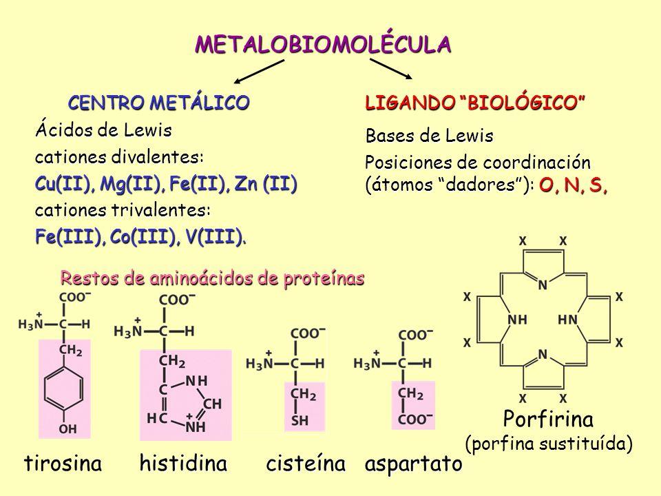 METALOBIOMOLÉCULA CENTRO METÁLICO LIGANDO BIOLÓGICO Ácidos de Lewis cationes divalentes: Cu(II), Mg(II), Fe(II), Zn (II) cationes trivalentes: Fe(III)