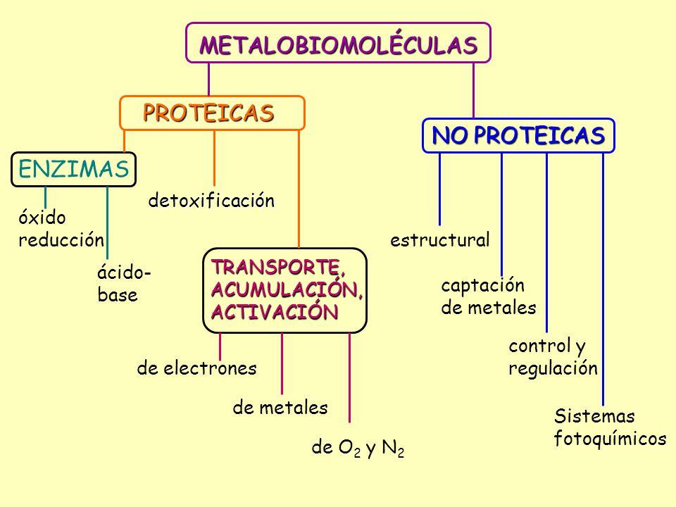 Catálisis de procesos Metal en el sitio activo Ejemplo redox redoxCu SOD: 2O 2 - O 2 2- + O 2 Fe Catalasa: 2 H 2 O 2 H 2 O + O 2 Mo/Fe Nitrogenasa: N 2 + 8H + NH 3 + H 2 ácido base ácido base Zn Anhidrasa carbónica: CO 2 + H 2 0 CO 3 H - + H + otras otras Co Vitamina B 12 : CCHHHR CCHHRH