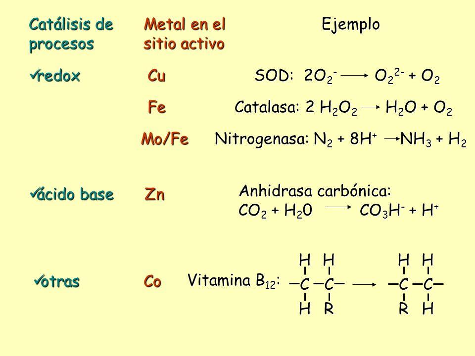 Catálisis de procesos Metal en el sitio activo Ejemplo redox redoxCu SOD: 2O 2 - O 2 2- + O 2 Fe Catalasa: 2 H 2 O 2 H 2 O + O 2 Mo/Fe Nitrogenasa: N