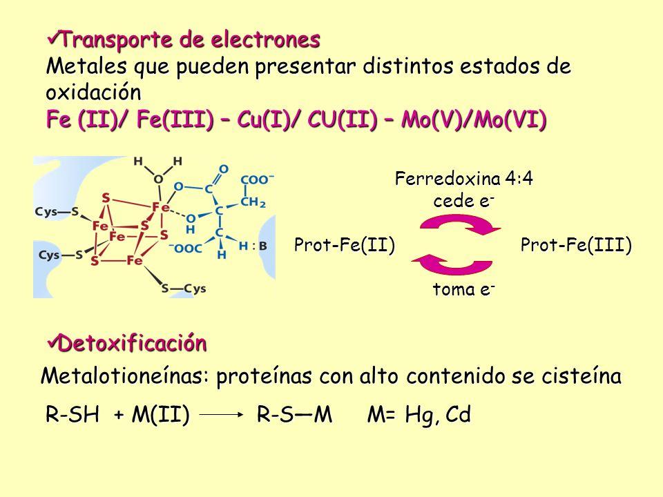 Transporte de electrones Transporte de electrones Metales que pueden presentar distintos estados de oxidación Fe (II)/ Fe(III) – Cu(I)/ CU(II) – Mo(V)